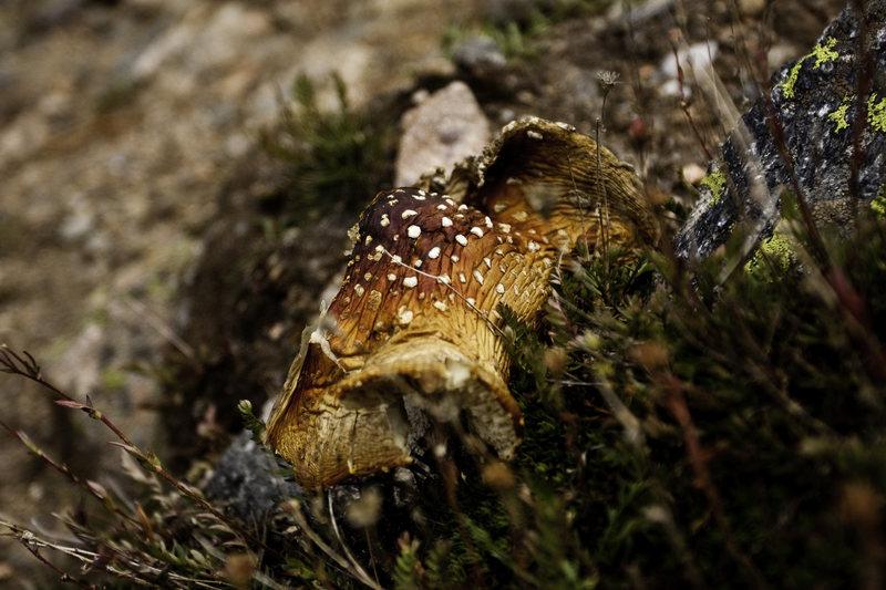 A mushroom.