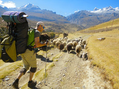 Rock Climbing Photo: Traffic jam on my way into the Ishinca Valley, Per...