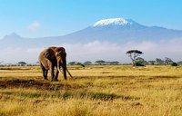 Rock Climbing Photo: Kilimanjaro.