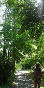 Rock Climbing Photo: On WSU campus