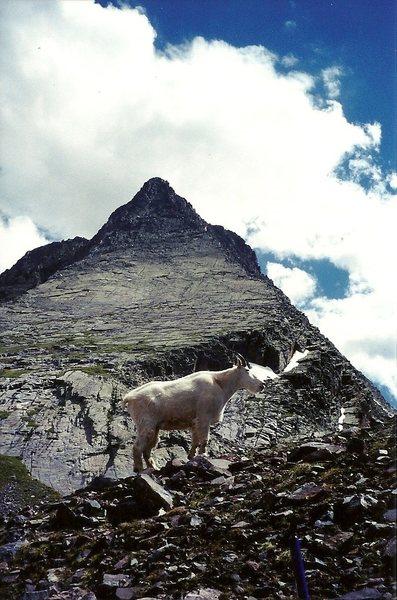 Rock Climbing Photo: Friendly....