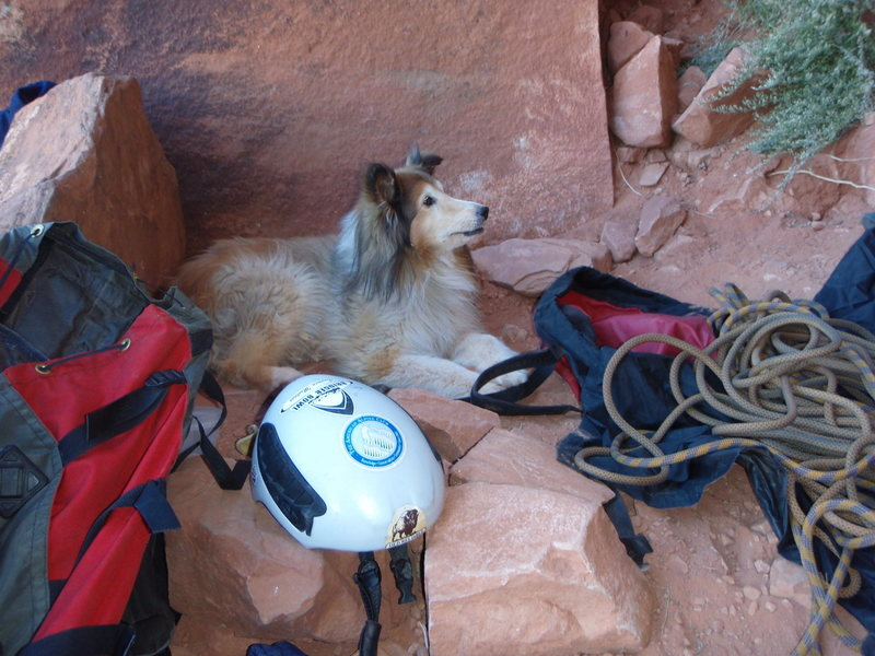 Rock Climbing Photo: Sassy my partner is gone 11/30/10