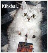 Rock Climbing Photo: kitty