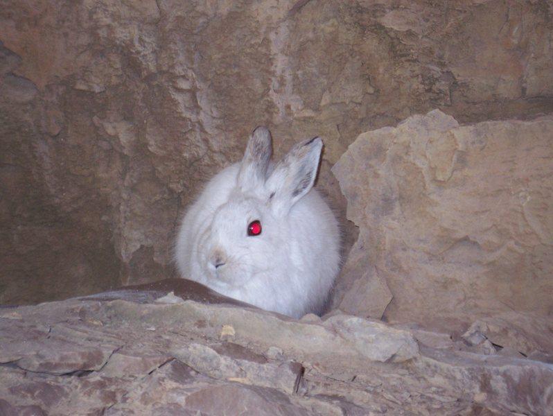 Beware of the Bunny.