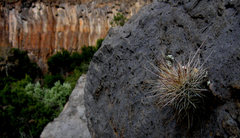 Rock Climbing Photo: Little 'pocket cacti' and the Left Wall in the dis...