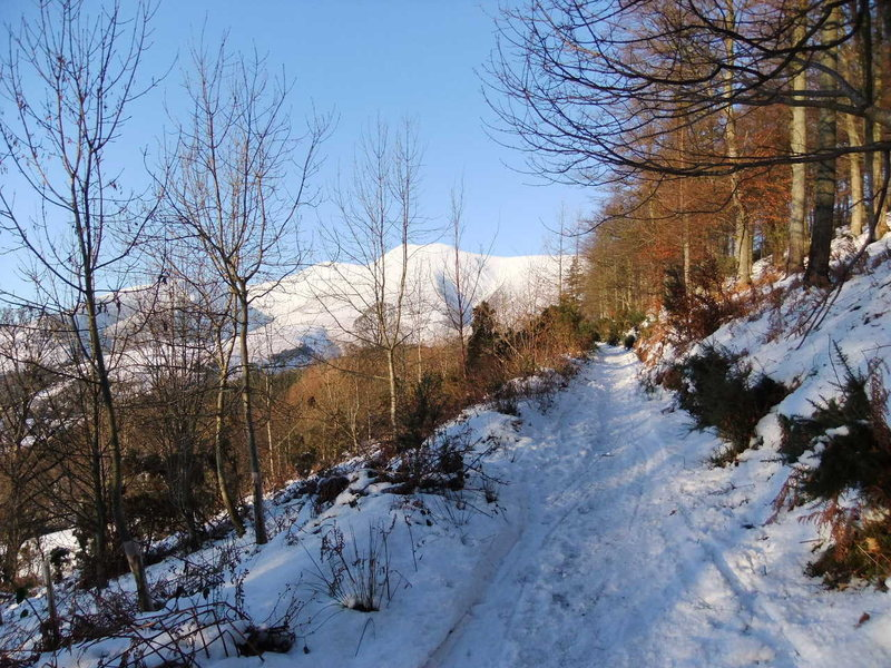 Snow December 5th 2010...Wow.. Skiddaw from Latrigg path.Photo.Pete Armstrong
