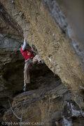 Rock Climbing Photo: Grady on Black Gold. photo by Anthony Carco