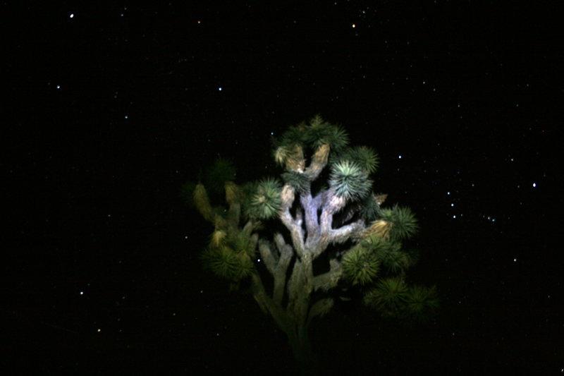 Yuca and Stars.