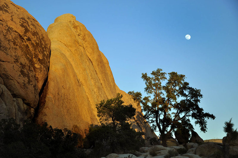 Rock Climbing Photo: J-tree