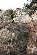 Rock Climbing Photo: There are more Piñon Pine trees that are hard to ...