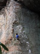 Climber on Too Many Puppies