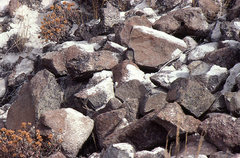 Rock Climbing Photo: Volcanic ash in the Columbia River Gorge. Septembe...