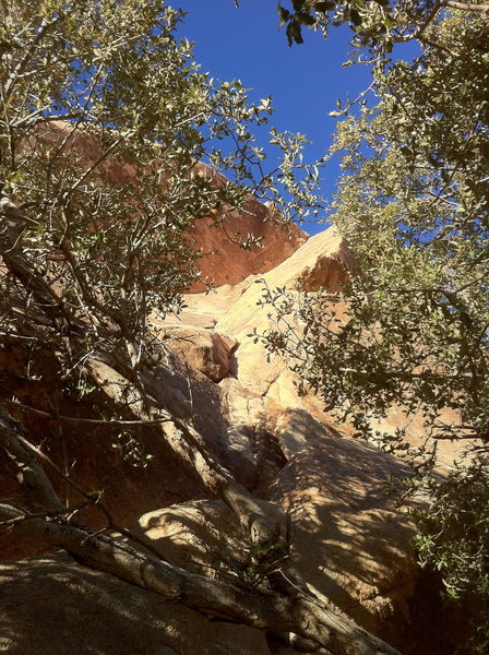 Rock Climbing Photo: Looking up Elusive Butterfly, from the base of the...