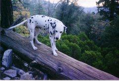 Rock Climbing Photo: My good buddy Mo.