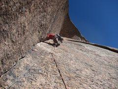 Rock Climbing Photo: Ramblin' Rose