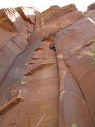 Rock Climbing Photo: blue TCUs