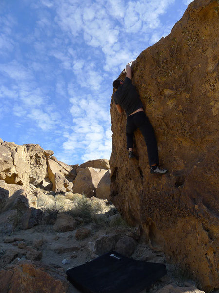 Jascha looking for good holds up high