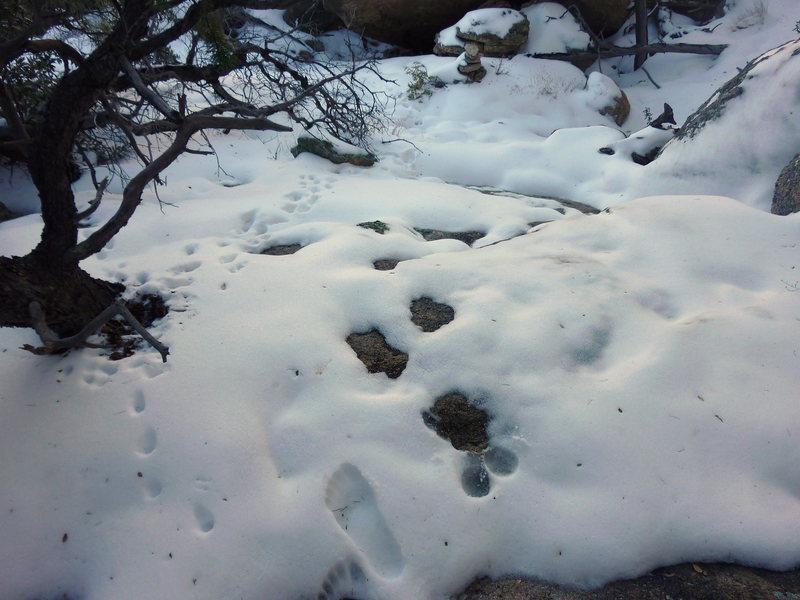 Rock Climbing Photo: Descending off Sheepshead Jan 3, 2011