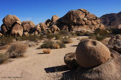 Rock Climbing Photo: Landscape in Indian Cove Campground