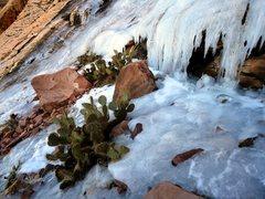 Rock Climbing Photo: Red Rock ice