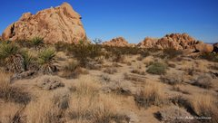 Rock Climbing Photo: Indian Cove Campground, Joshua Tree NP