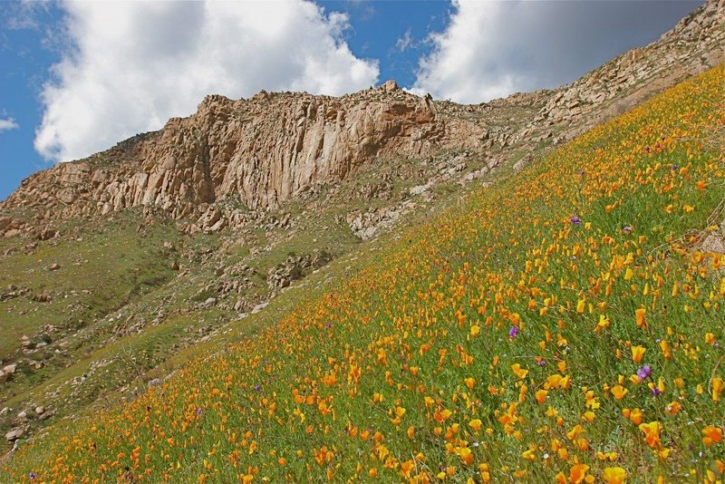 Rock Climbing Photo: Eagle Peak and flowers.  Credit Kevin Worrall