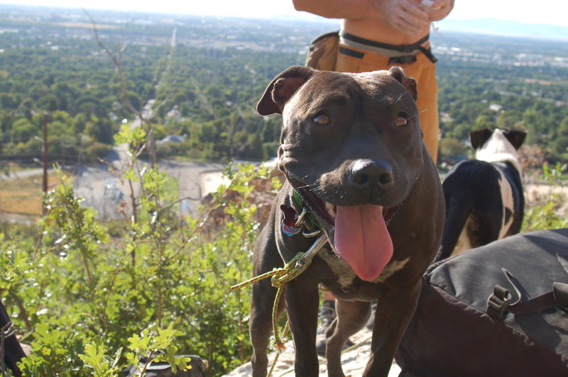 Rock Climbing Photo: Vegas the Dog