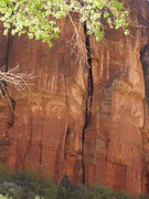 Rock Climbing Photo: Owl Rock Zion