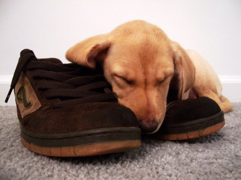Sleeping on my shoes