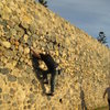 traversing the sea wall in La Jolla, CA