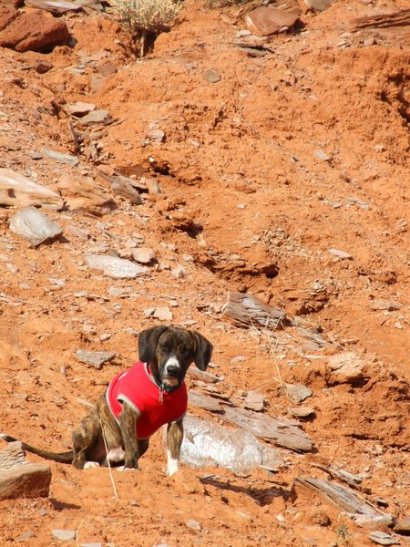 This is Chester. We don't know what (breed) he is, but he loves visiting Moab as much as we do.
