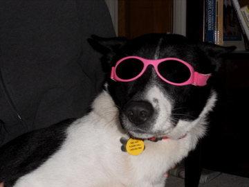 The coolest puppy around!