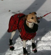 Rock Climbing Photo: Shiny in her winter clothes - don't laugh at her p...