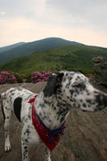 Rock Climbing Photo: Zaida girl at Roan Highlands on the AT.
