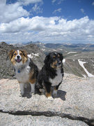Bear and Buddy on Mt Evans summit with Mt Bierstadt in the background.