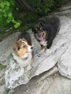 Bear and Buddy at the bottom of Steinfell's Dome in the City of Rocks.
