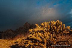 Rock Climbing Photo: Sunrise on a stormy morning, Red Rocks, Nevada
