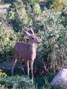 Rock Climbing Photo: bambi?