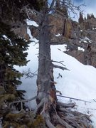 Rock Climbing Photo: The large dead tree we belayed from atop pitch 6, ...
