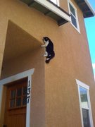5.14 Buildering Kitty Style