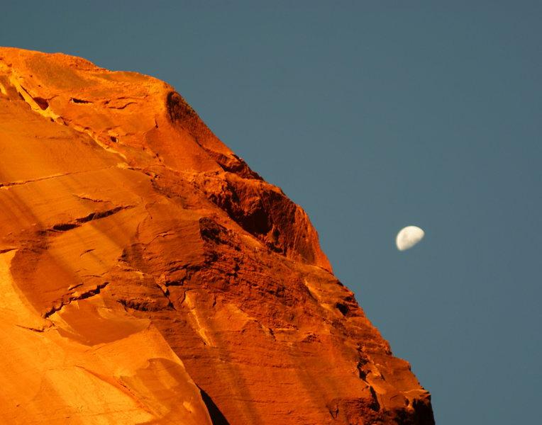 moon rise cat wall