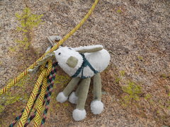 Rock Climbing Photo: What are EWE doing up here?