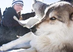 Rock Climbing Photo: Wolf