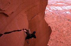 Rock Climbing Photo: dead crow