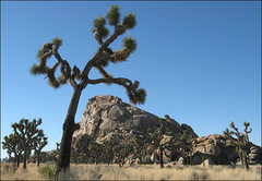 Rock Climbing Photo: Jimmy Cliff. Photo by Blitzo.