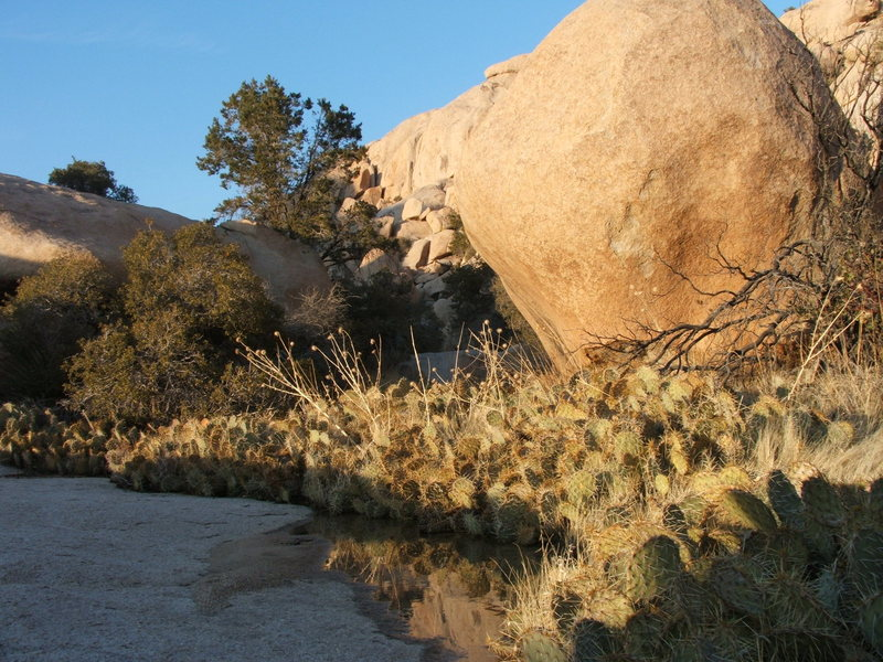 Rock Climbing Photo: Thirsty Cactus' know where to grow! The Wonderland...