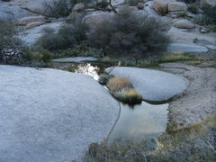 Rock Climbing Photo: I have never observed sitting water in J-tree befo...