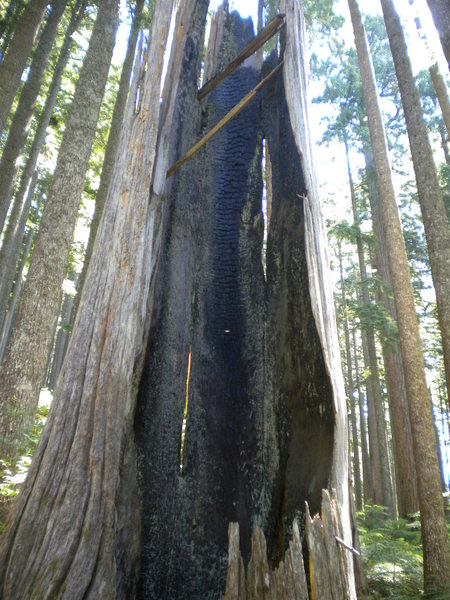 Rock Climbing Photo: Lightning struck tree