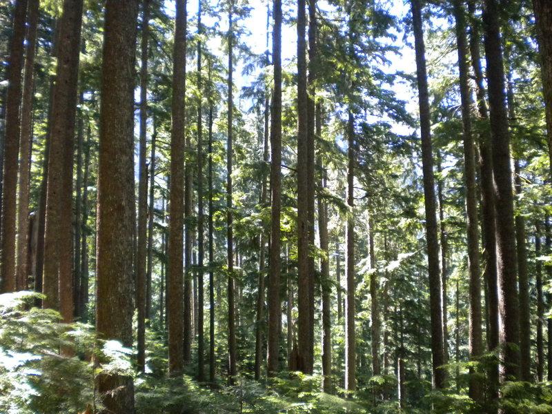 Rock Climbing Photo: Cedars