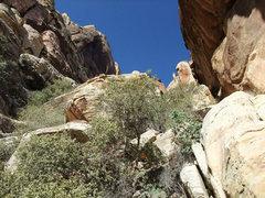 Rock Climbing Photo: gully shrubbery